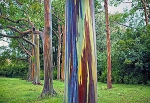 szivárványfa.3
