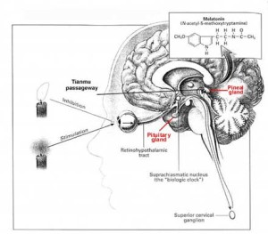 brain_diagram2-2