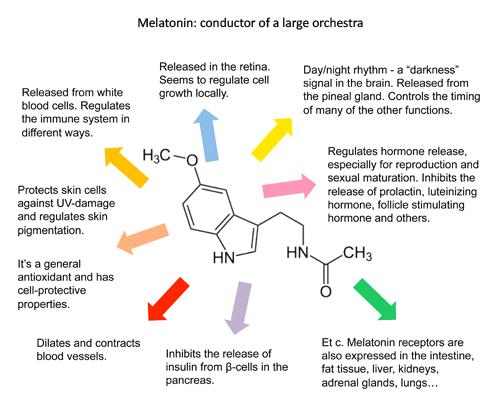 how to produce melatonin faster